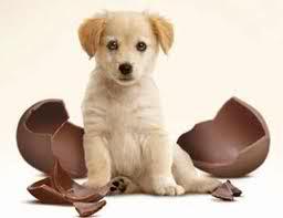 cani e cioccolata 2
