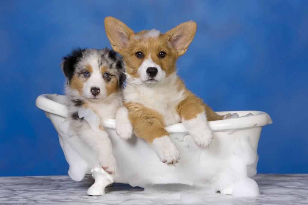 Tosare il pelo del cane tutti i perch tra scienza e for 2 bagni piccola casa