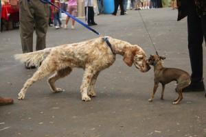 cani al guinzaglio