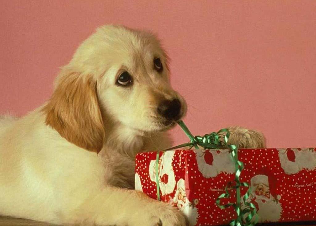 Immagini Cani Natale.Un Natale Diverso Fino Al 22 Dicembre Debora Segna