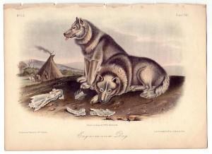 alimentazione cani da slitta