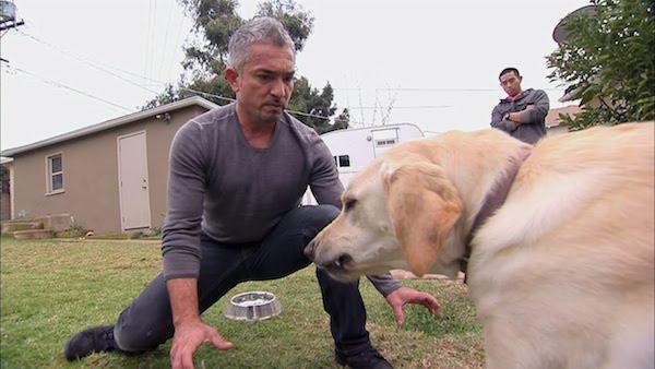 Cesar Dog Biting Leash