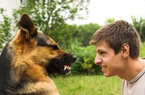ringhio cane e uomo