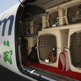 Possiamo davvero volare insieme al nostro cane sugli aerei for Quali compagnie aeree portano animali domestici in cabina