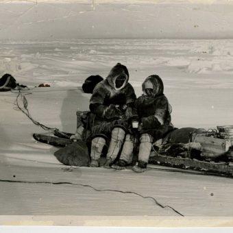 inuit dog 16